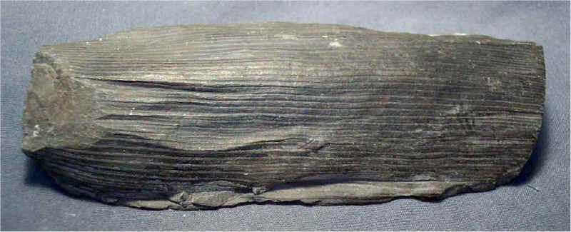 Stringy/fibrous Pennsylvanian Fossil = Algae?, Coral ...